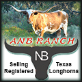 ANB Ranch Longhorns