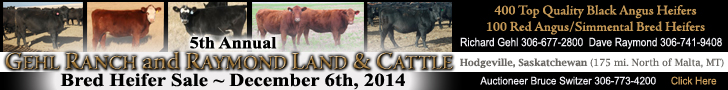 Gehl Ranch and Raymond Land & Livestock Bred Heifer Sale