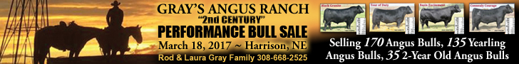 Gray's Angus Ranch Bull Sale