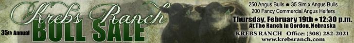 Krebs Ranch Bull & Commercial Female Sale