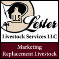 Lester Livestock Services LLC - Replacement Cattle Marketing