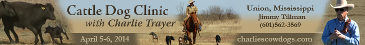 Charlie Trayer Cattle Dog Clinic
