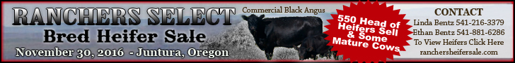 Ranchers Select Heifer Sale