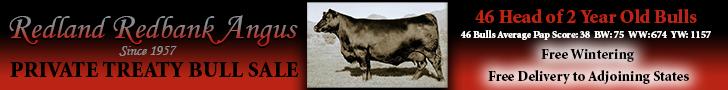 Redland Redbank Angus Private Treaty Bull Sale