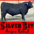 Silver Bit Angus Ranch