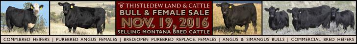 Thistledew Land & Cattle Company Bull & Female Sale