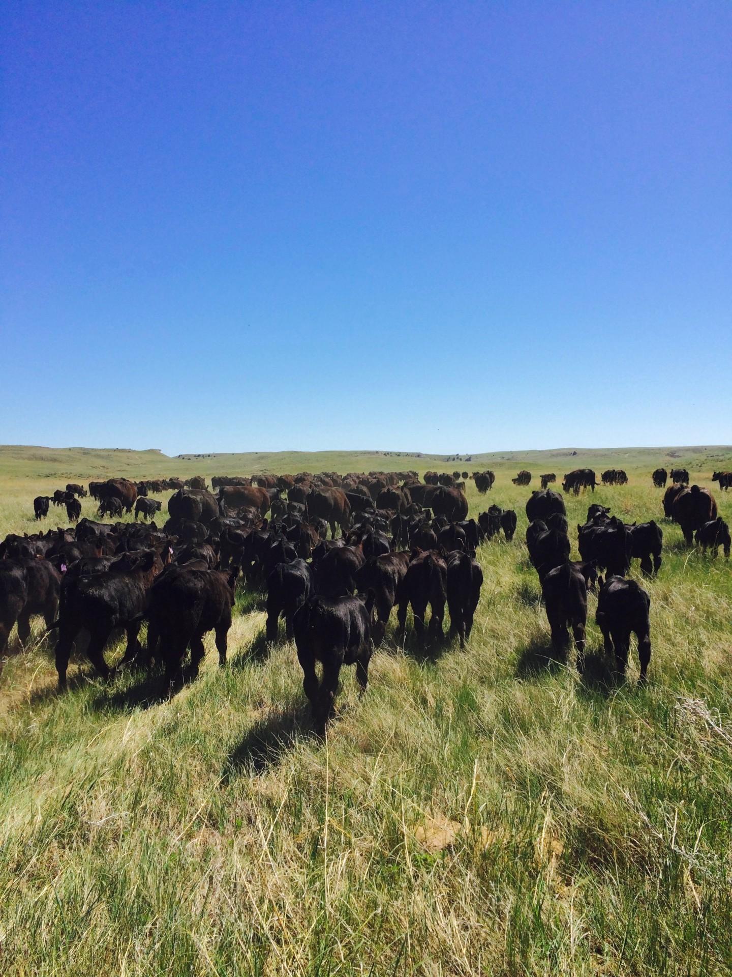 Wanted Ranch Hand Western Nebraska