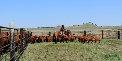 Ranch family looking to relocate