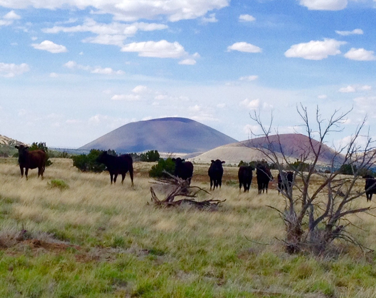 arizona black personals Cl arizona choose the site nearest you: flagstaff / sedona mohave county phoenix prescott.