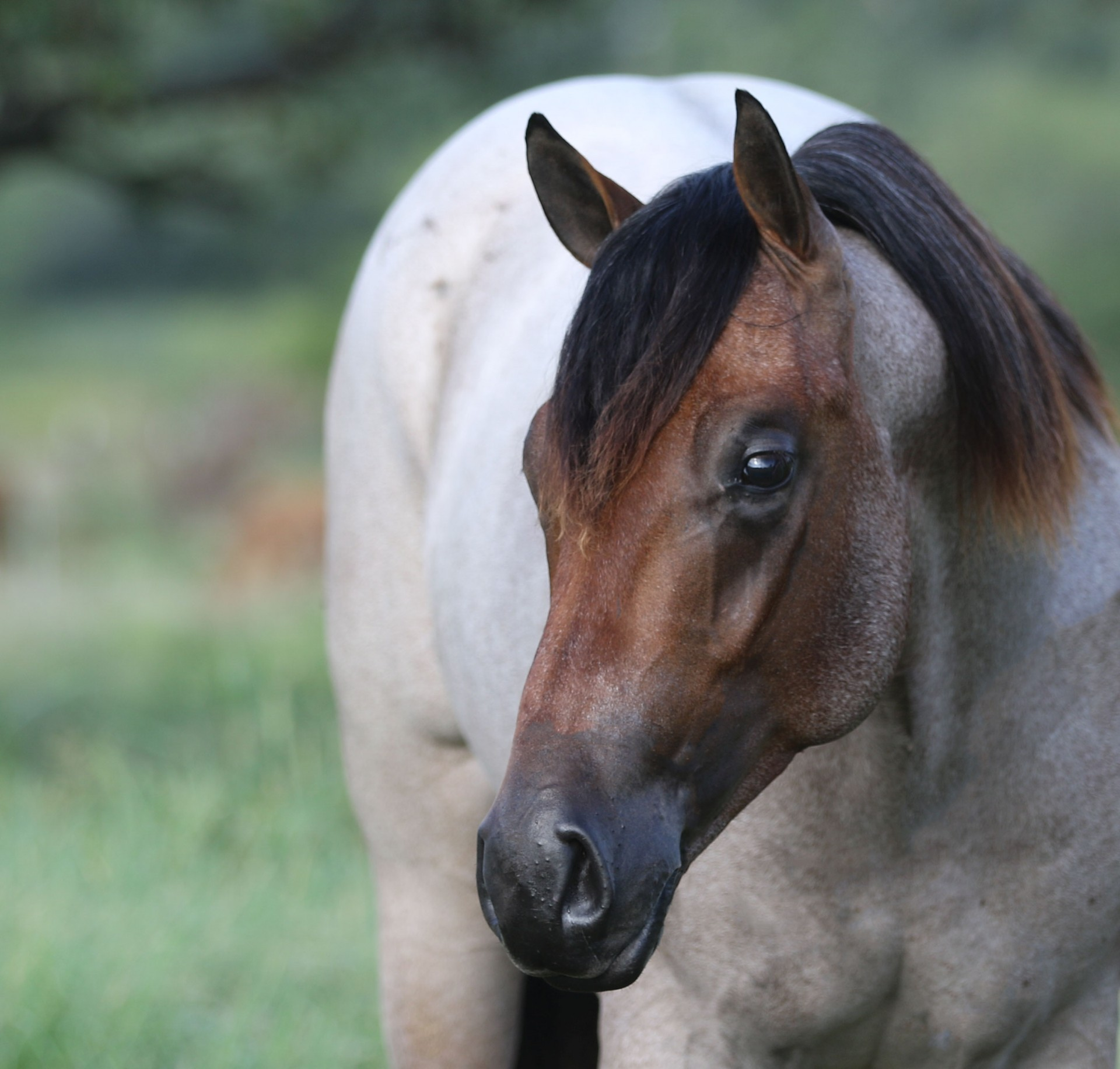 Wanted - Help for Busy Cutting Horse Facility - Texas
