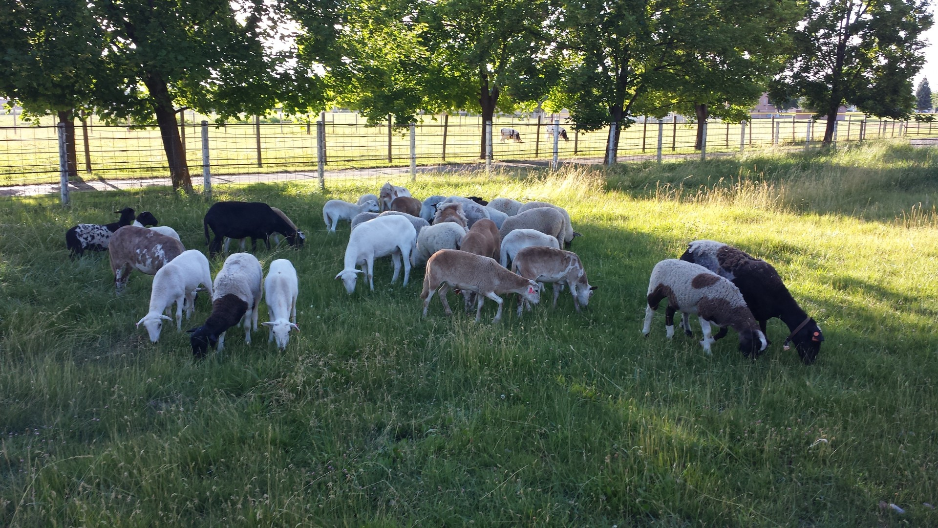 sheep ranch cougars personals Real estate and homes for sale in sheep ranch, ca on oodle classifieds join millions of people using oodle to find local real estate listings, homes for sales, condos for sale and foreclosures.