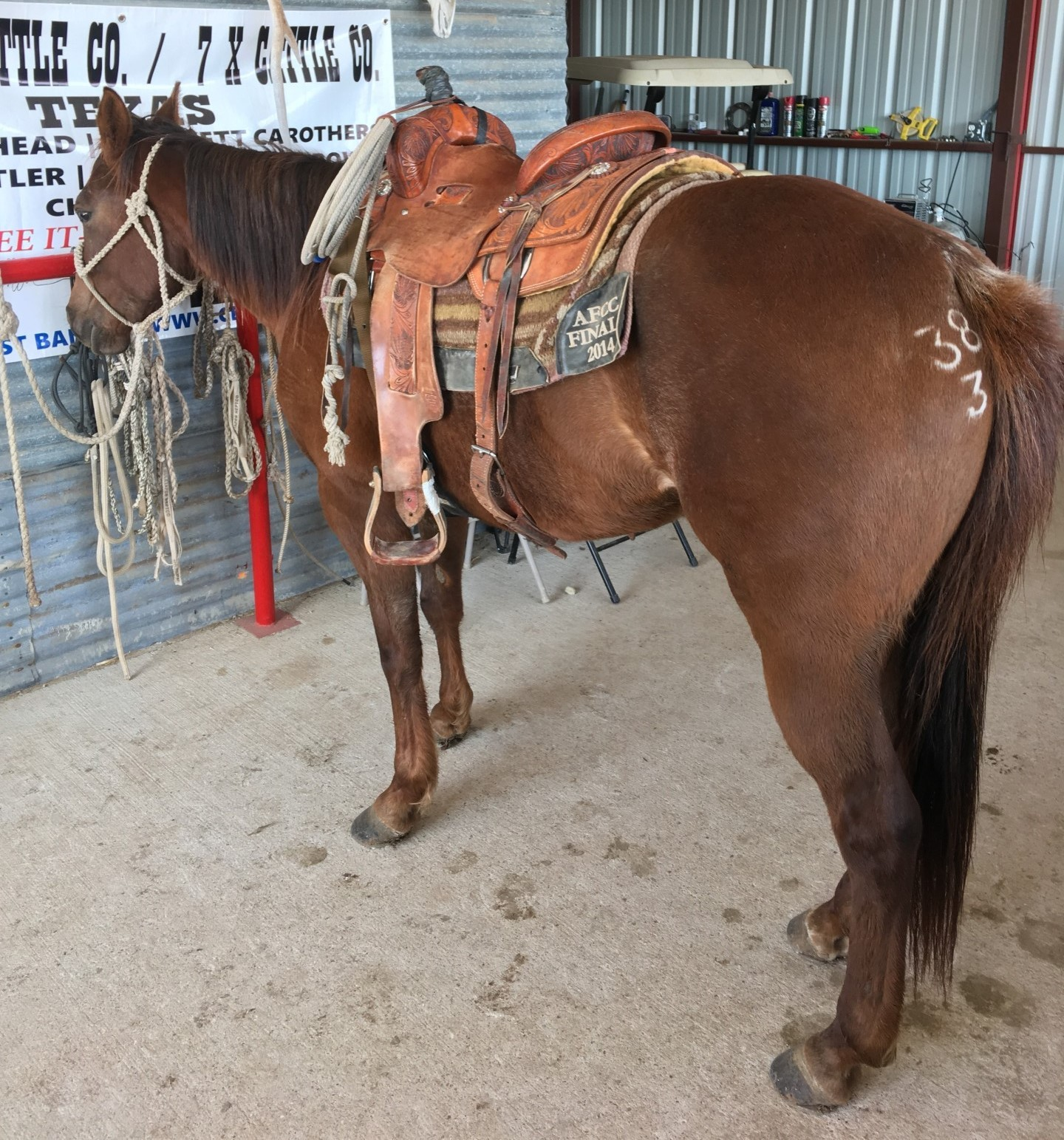 5 Year Old Singleton Ranch Mare