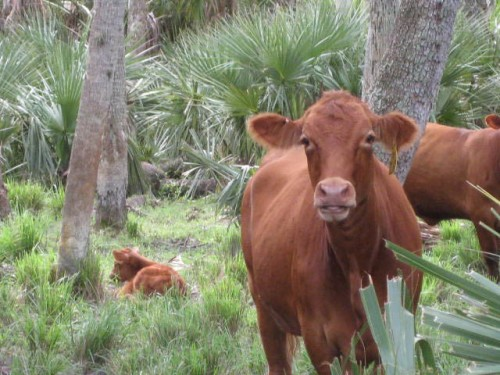 Wanted - Ranch Manager - Central Florida