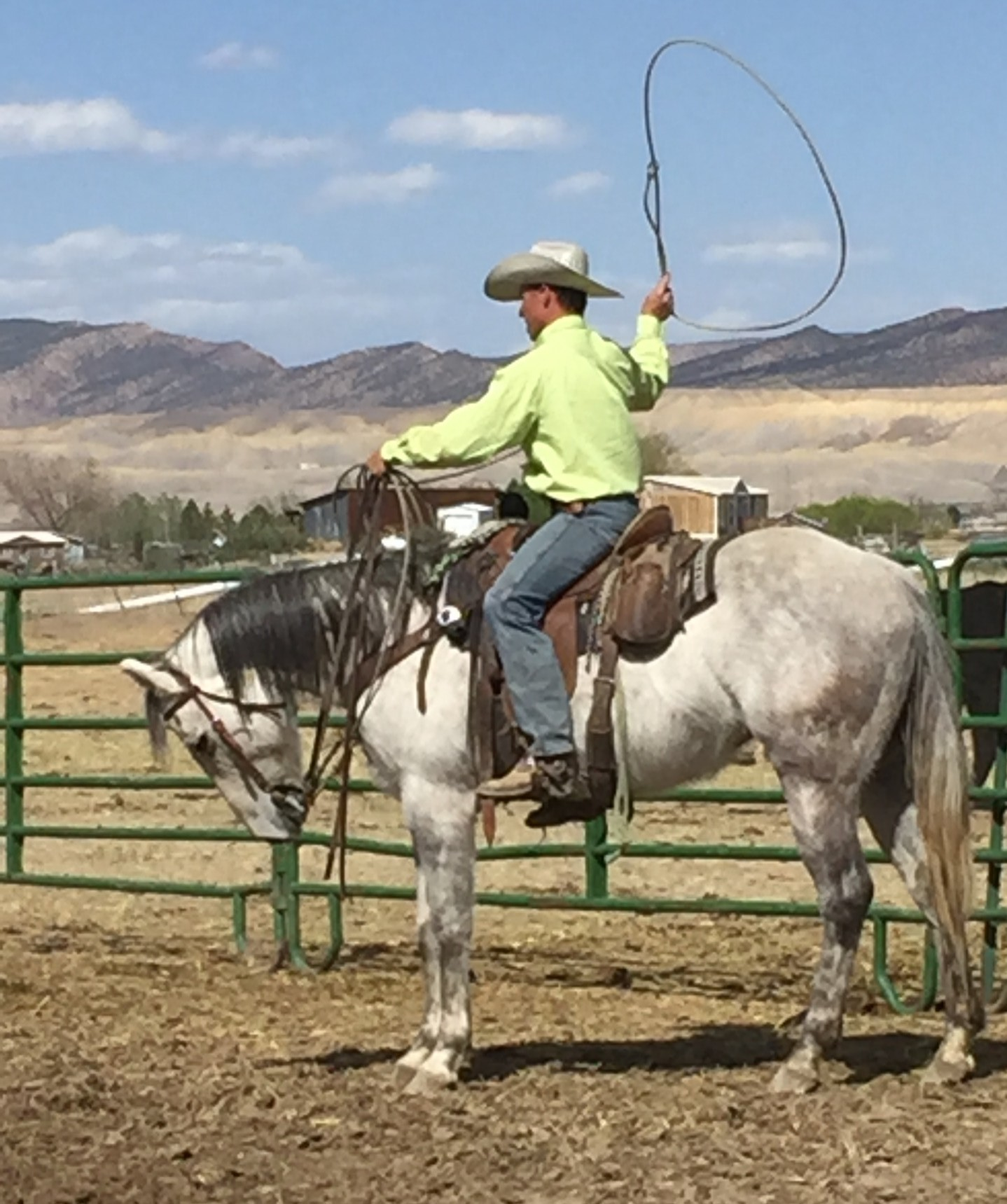 5 Year Old Gray Ranch Broke Gelding Paddys Irish Whiskey on his papers