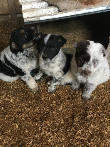 Small Breed Dogs For Sale In Utah