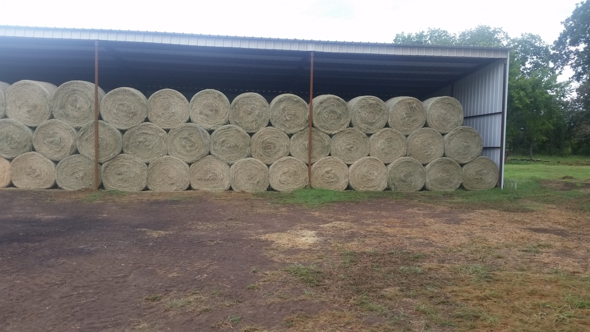 100 Bales - Tifton 85 Barn Stored Horse Quality Round ...