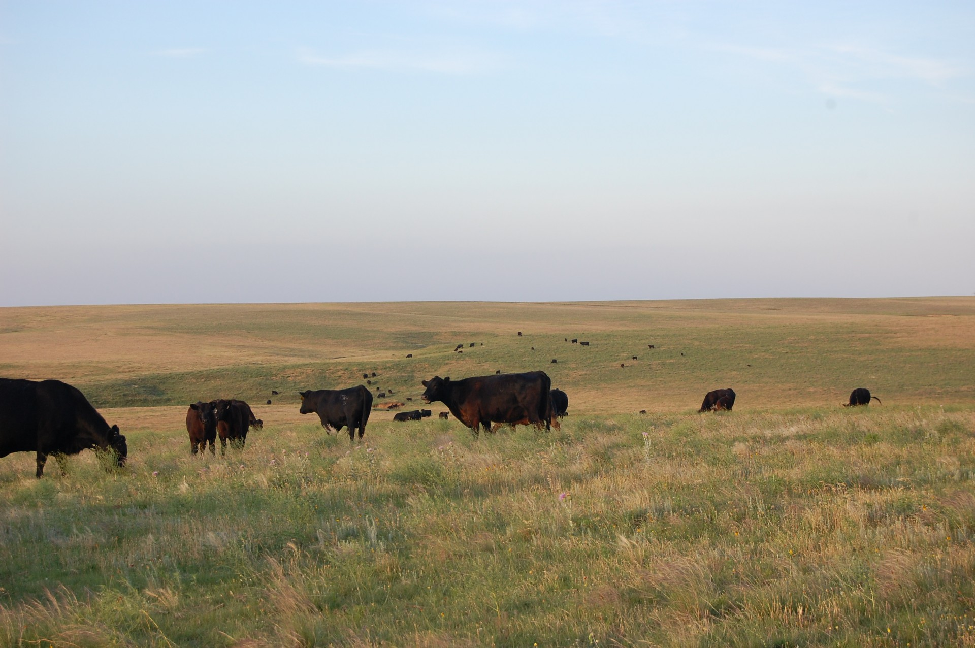Wanted - Ranch Hand For Large Cattle Ranch - Kansas