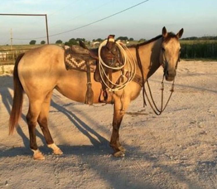 Lori/ /Pferd Buckskin lo38017z