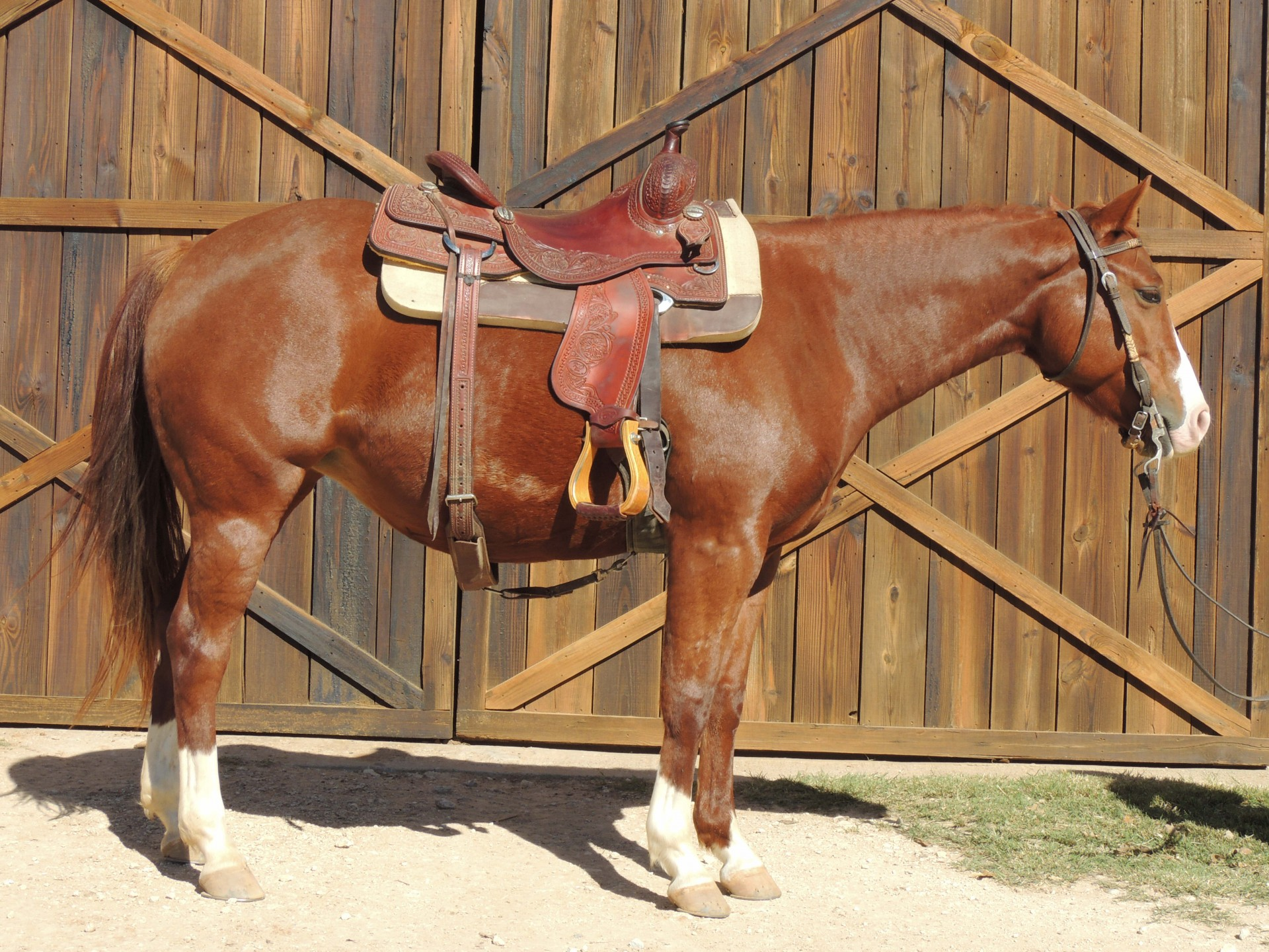 Grays Starlight 4 Year Old Filly