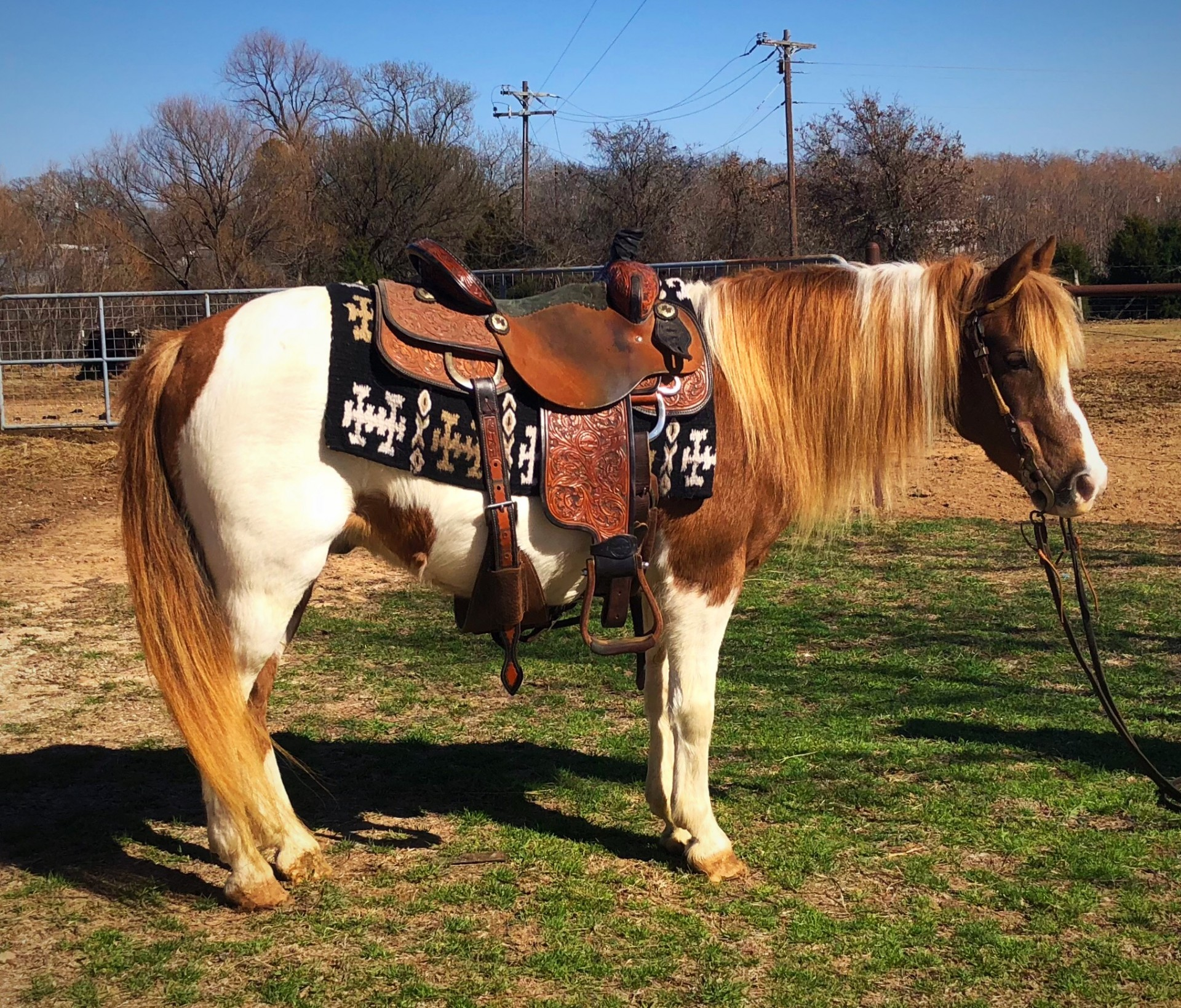 Fancy Bomb Proof 12 2H Kids Ranch Pony - Goat Ties - Drag Calves