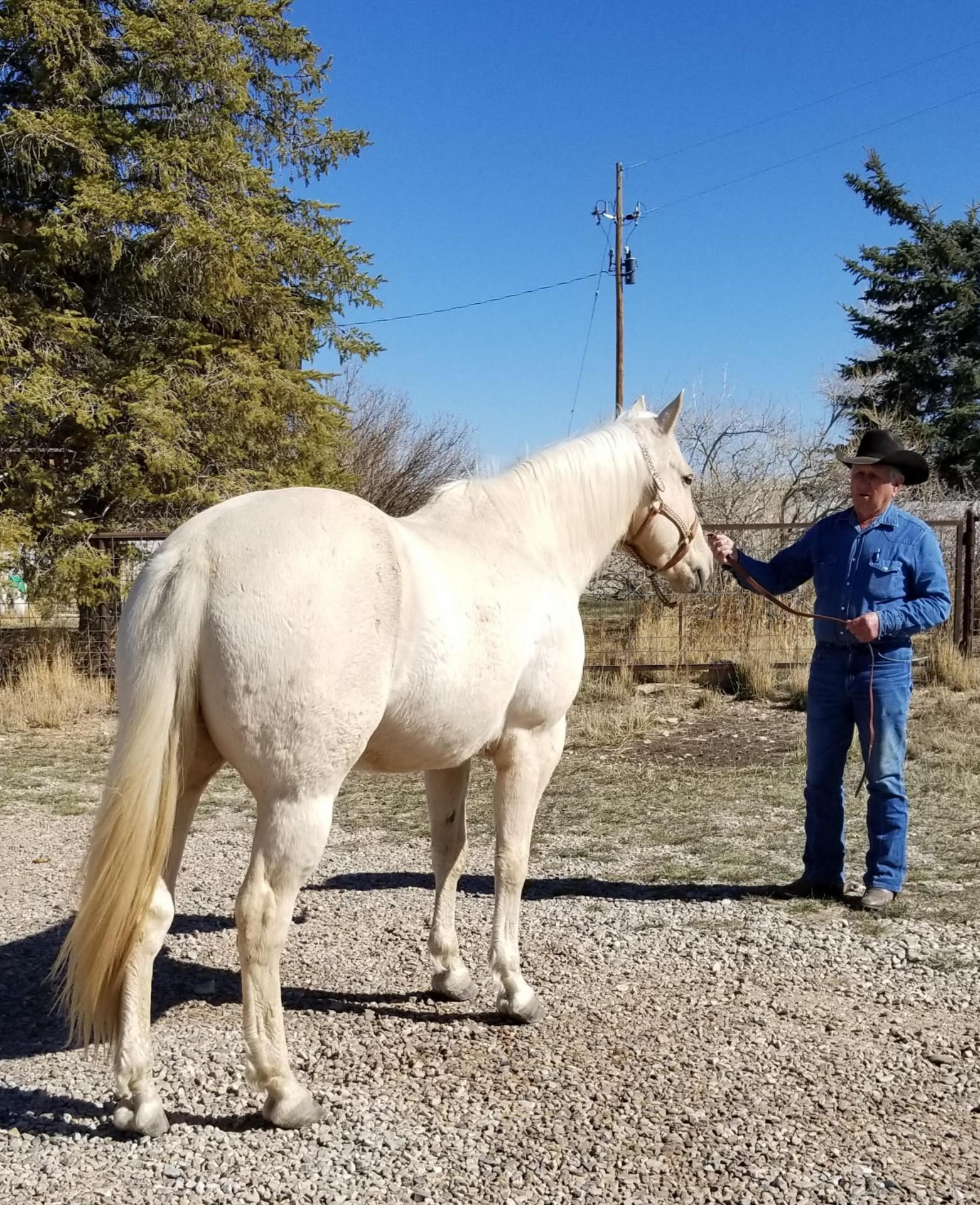 Blondie One Owner Legit Ranch Horse