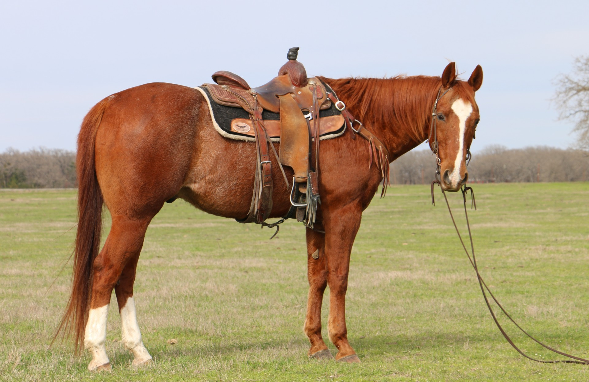 Head and Heel horse for sale Super Gentle Obstacles and Ranch