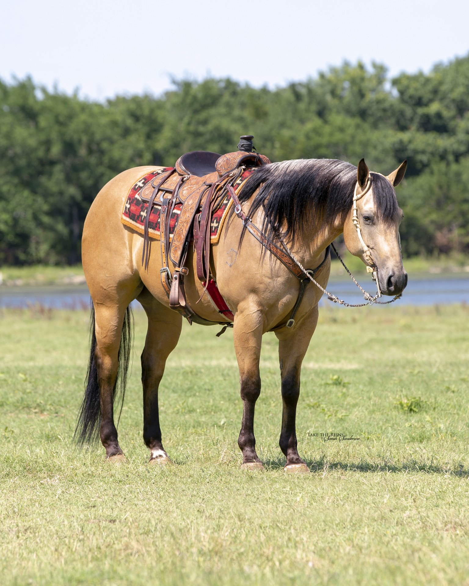 Chisholm Ranch Horse Delux Big Gorgeous Head Horse Tricks 100 Gentle Mounted Shooting Ranch Riding