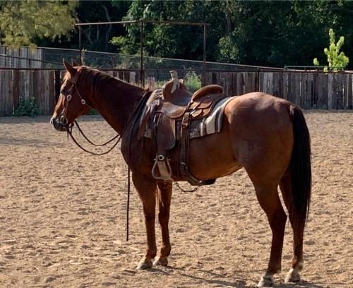 Chesnut Family/Ranch Horse