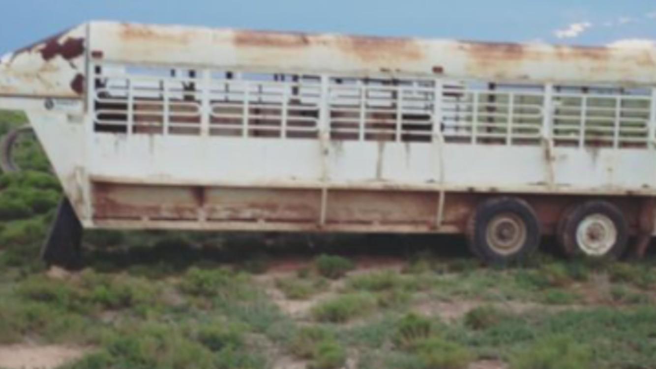 2001 Easley cattle