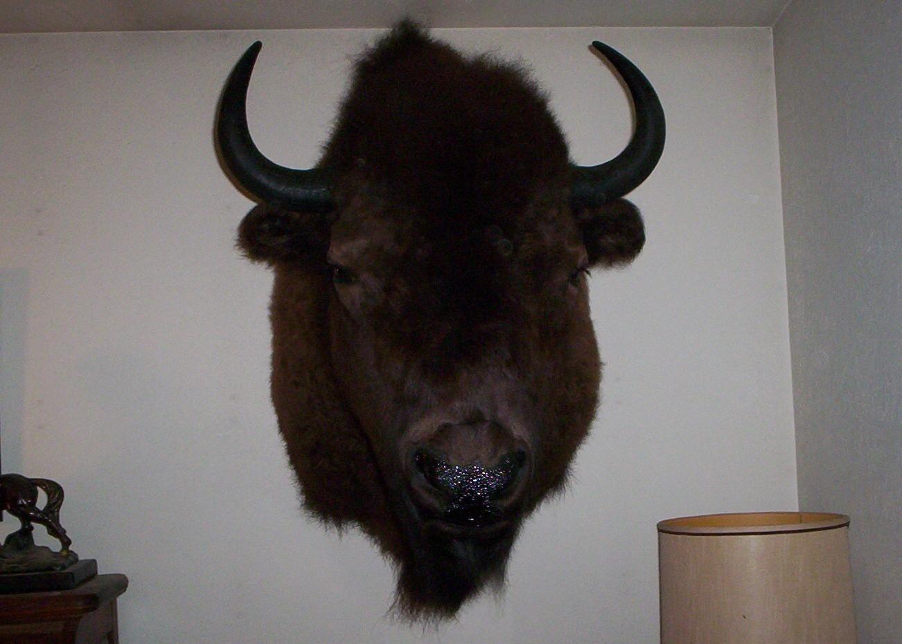 Large Buffalo Shoulder Mount
