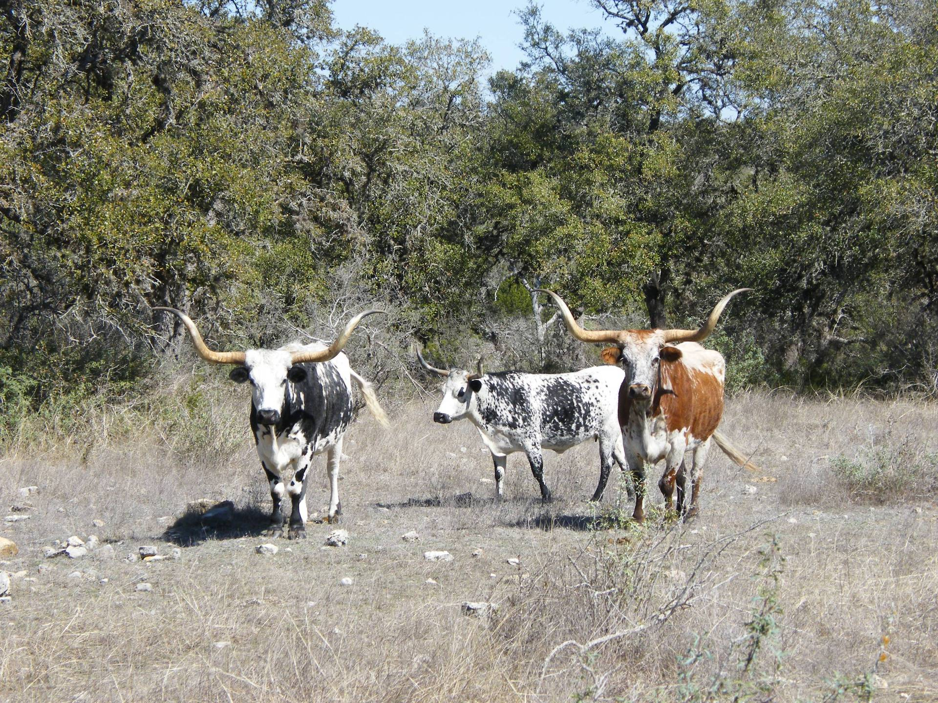 Wanted - Ranch Manager/Worker - Texas