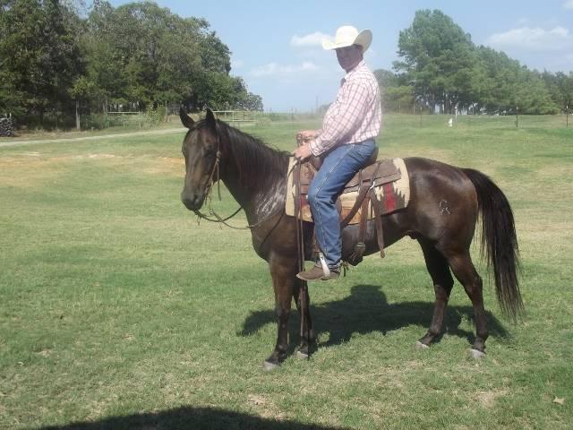 TCU ranch management graduate seeking foreman/manager job