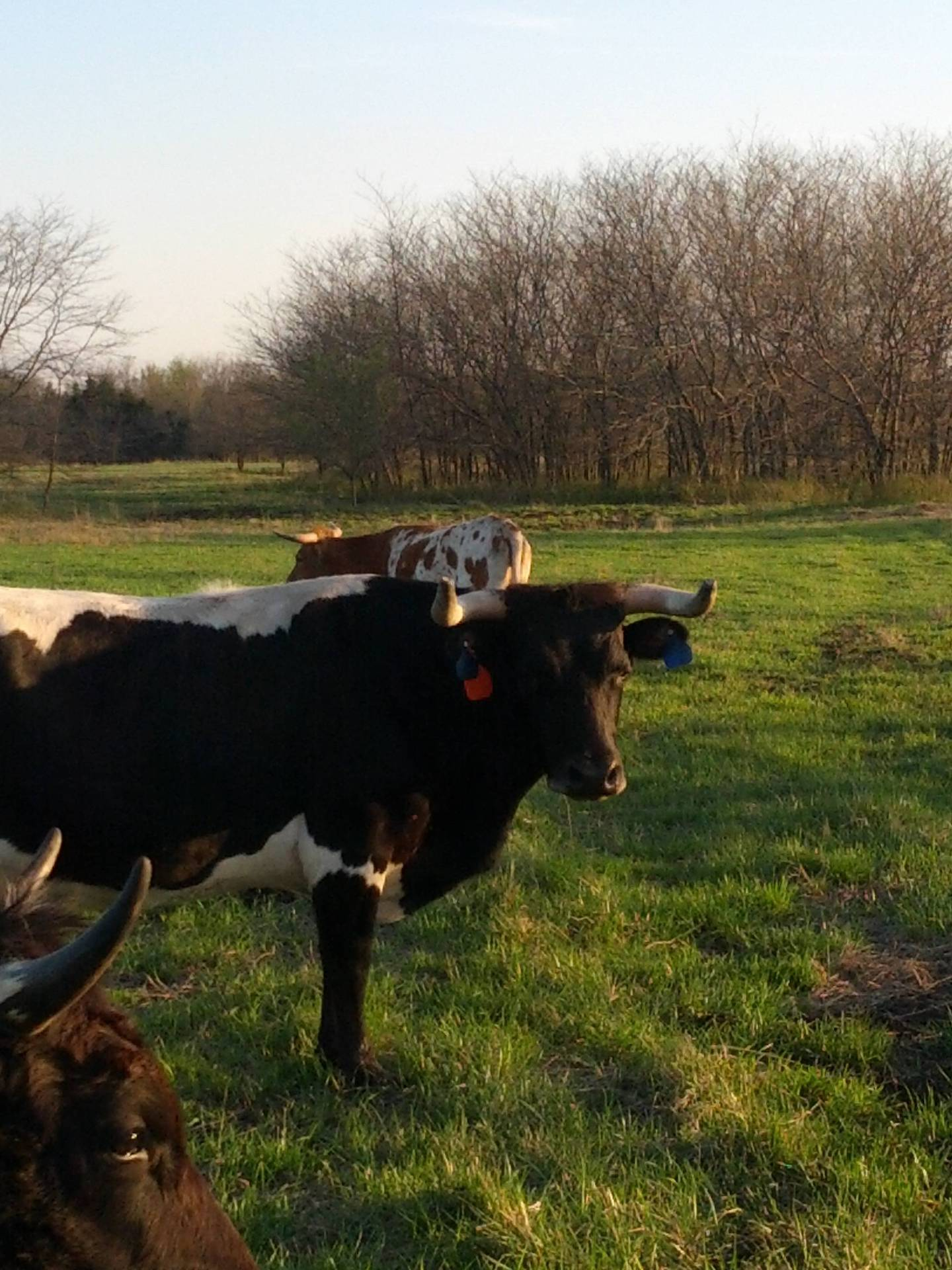 Ranch Dogs For Sale In Kansas